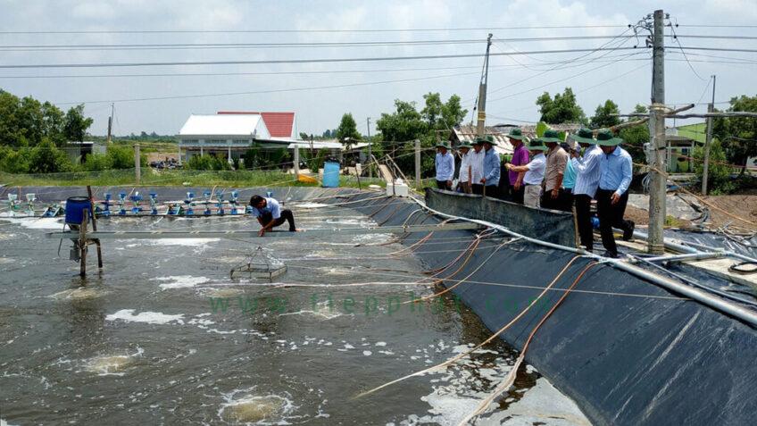 Năm 2021: Chủ động các biện pháp phòng, chống Hạn Hán, Xâm Nhập Mặn trong vụ Nuôi Tôm