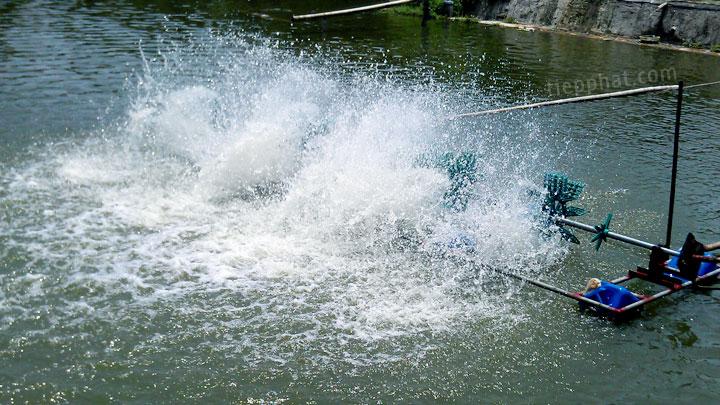 Các biện pháp Phòng Chống Nắng Nóng cho thủy sản nuôi