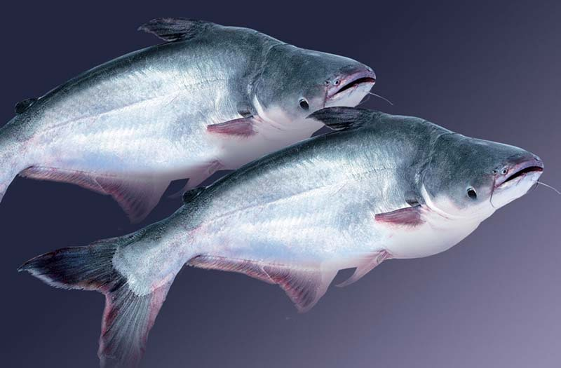 How to prevent and treat diseases in Fish