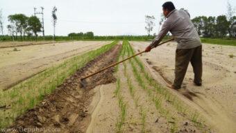 Hỗ trợ miền Trung tái sản xuất Nông Nghiệp sau bão lũ lịch sử