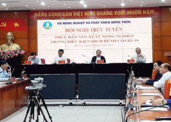 Hội nghị trực tuyến: Thúc đẩy sản xuất nông nghiệp trong điều kiện dịch bệnh Covid-19