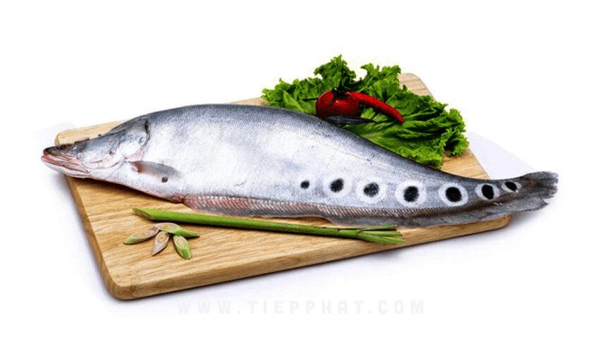 Nghề nuôi Cá Thát Lát phát triển mạnh ở Hậu Giang