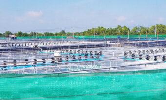 Việt Nam có trung tâm công nghiệp Tôm đầu tiên ở Bạc Liêu