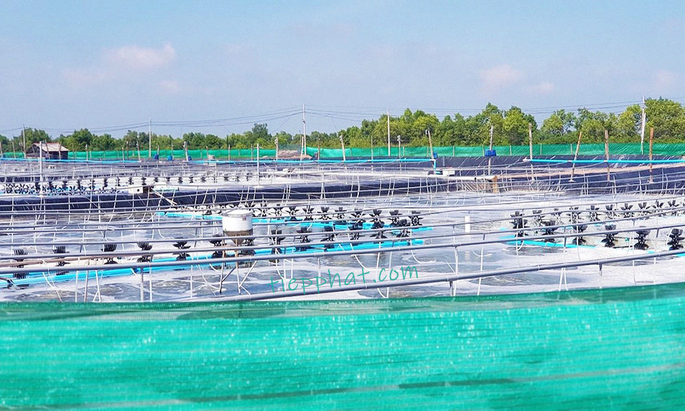 Bac Lieu to develop the first Shrimp center in Vietnam